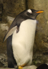 This penguin is not surprised.